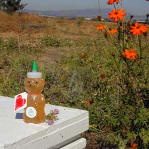 Honey 12 oz. Plastic Squeeze Bear - Big Valley Wildflower