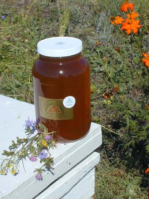 Honey 12 lb Gallon - Big Valley Wildflower