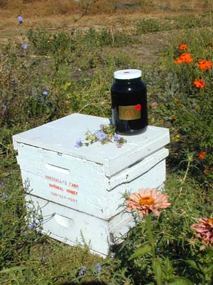 Honey 12 lb Gallon - Wild West Wildflower
